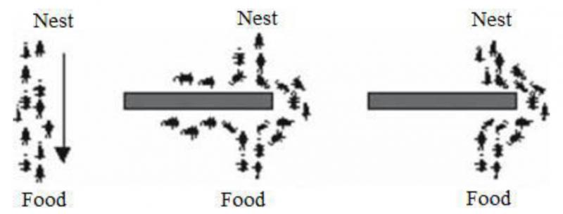 Fourmis trouvant le chemin le plus court pour contourner un obstacle devant de la nourriture