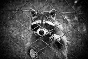 Petit animal derrière une grille