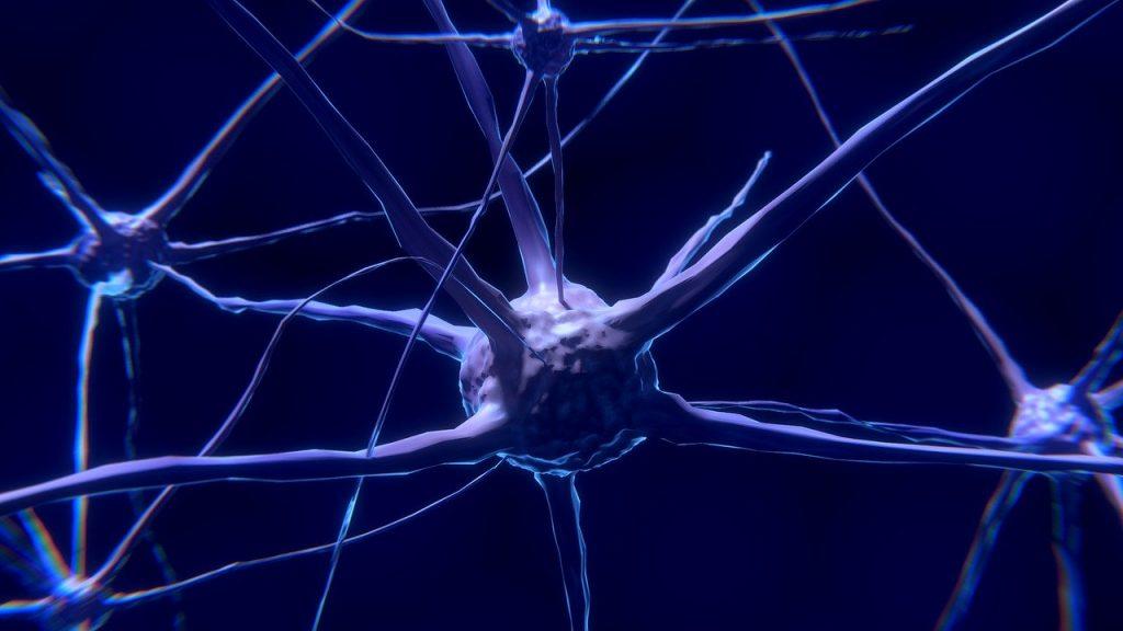 Cellule nerveuse